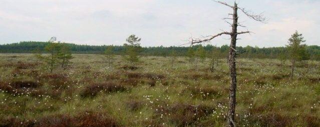 Kamanų rezervato švyliai